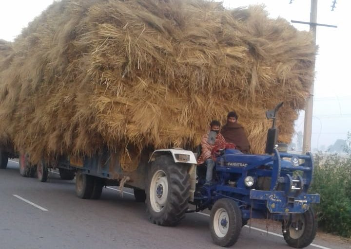 Farmers carrying wheat on tractors